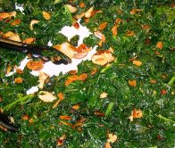 Steamed kale and almond salad