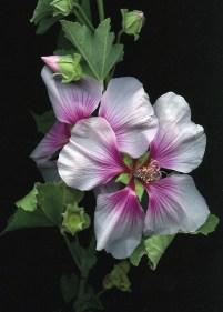 Flower Stretch