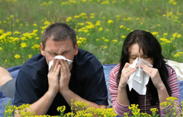 Niesen bei Pollenflug