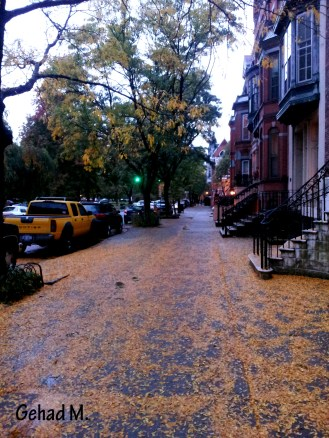 Downtown Albany, NY