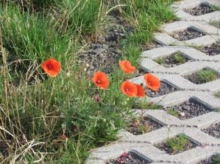 Blumen auf der Kippe