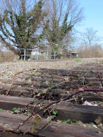 Brombeerranken und Holzschwellen