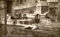 Im Zoo 1929