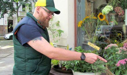 Hauke mit Biene am Blumenladen Freischwung