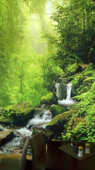 Regenwald im Yellow Brasil
