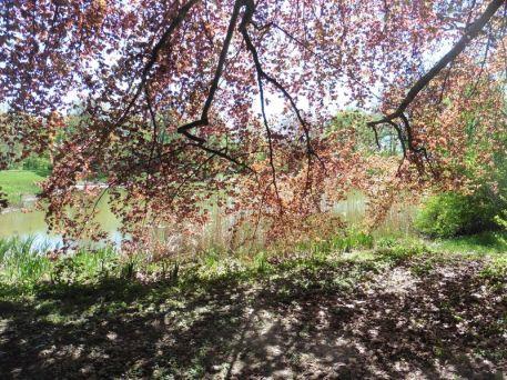 Im Stünzer Park