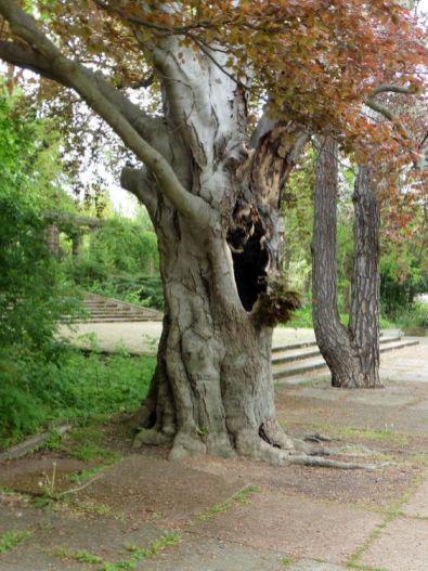 Hohler Baum auf der Agra