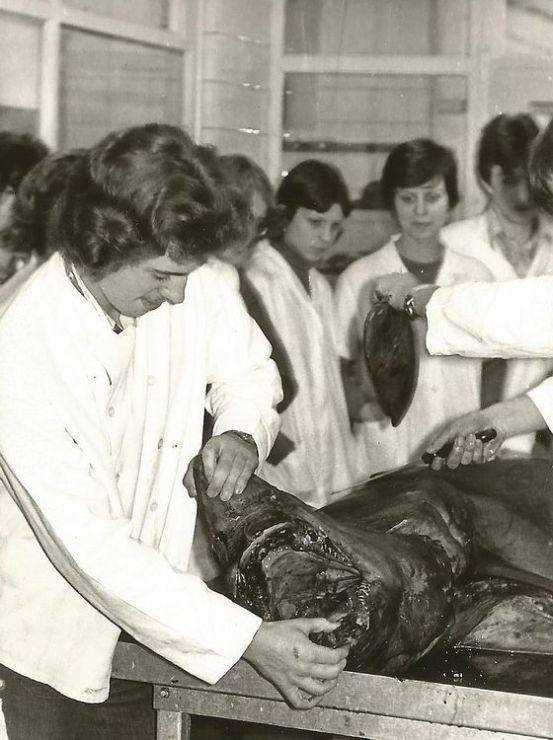 Kochlehrlinge beim Zerlegen eines Hais im Astoria, Foto: Archiv JR
