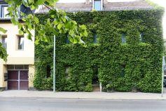 Grüne Wand in Leutzsch