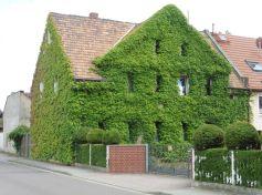 Grüne Wände in Zöbigker