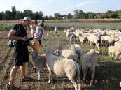 Paten und Schafe (Foto: Jens)