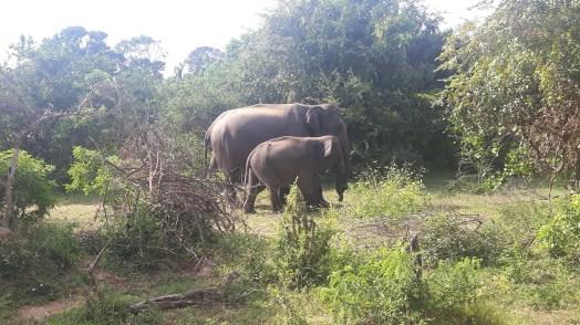 Yala-Nationalpark