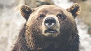 Das Fell des Bären