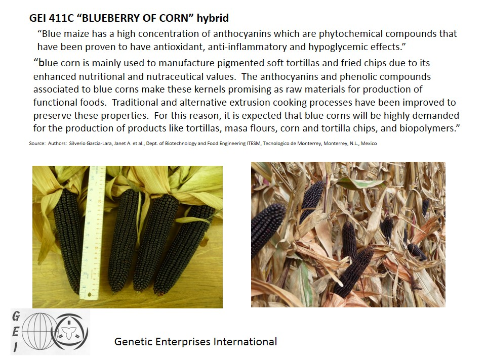 GEI 411C BLUEBERRY OF CORN2