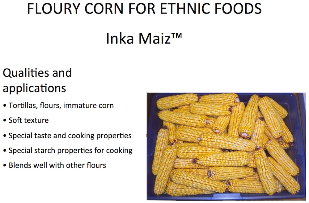 GEI FLOURY CORN FOR ETHNIC FOODS Inka Maiz
