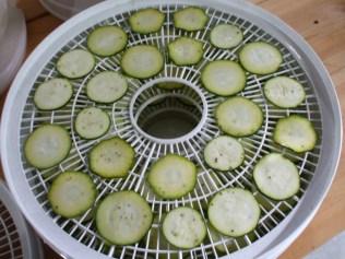 Raw zucchini slices on dehydrator trays...
