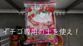 イチゴの土アイキャッチ