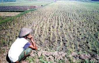 Krisis Pangan  Sebuah Ironi Negeri Agraris