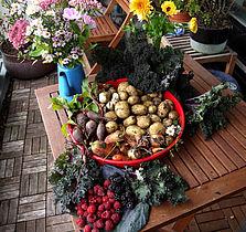 Smag på efterhøst fra nyttehaven