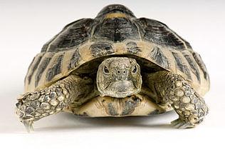 Samvirkemøde: Stemmer og skildpadder