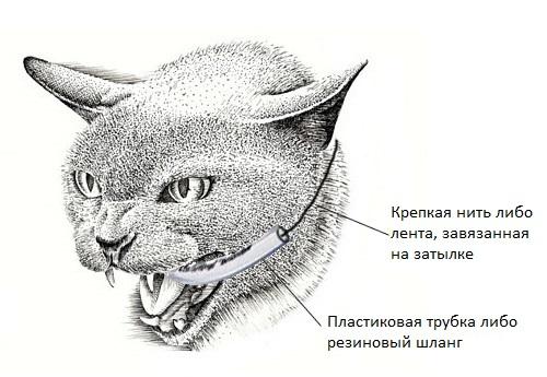 Как дать коту таблетку от глистов. Как правильно давать коту таблетки от глистов и как часто, меры предосторожности. Лекарство и сливочное масло