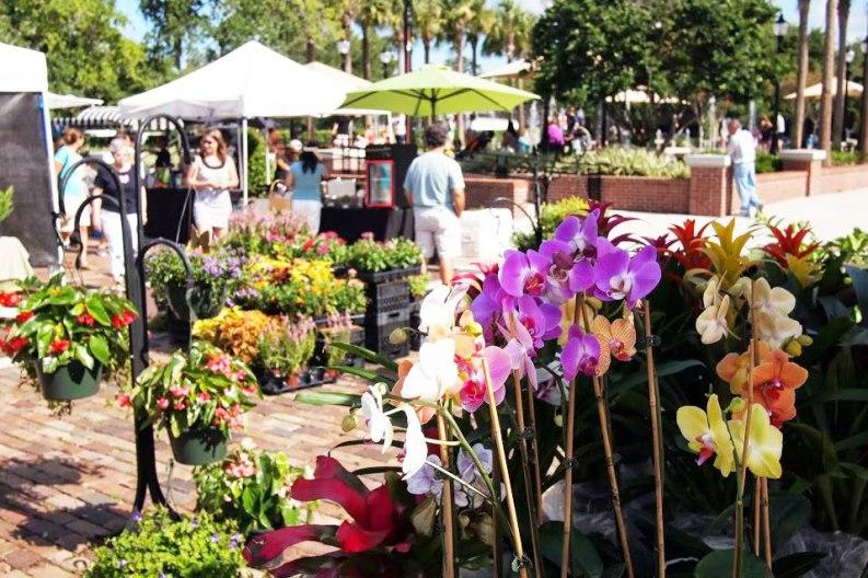 winter-garden-farmers-market-flowers