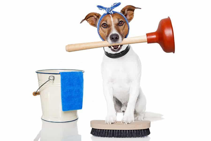 Voorjaarsschoonmaak 10 tips voor hondenbezitters
