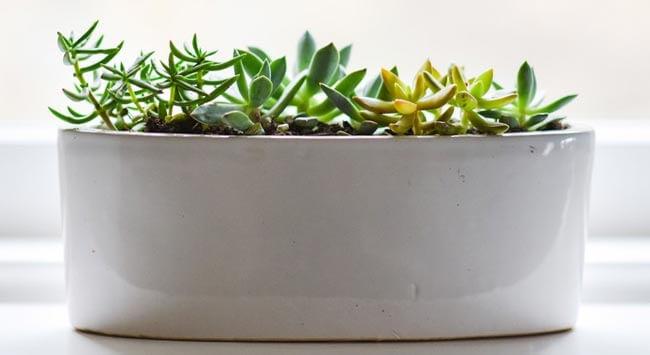 Planten Kiezen Voor Jouw Interieur  GelukkigerWonen