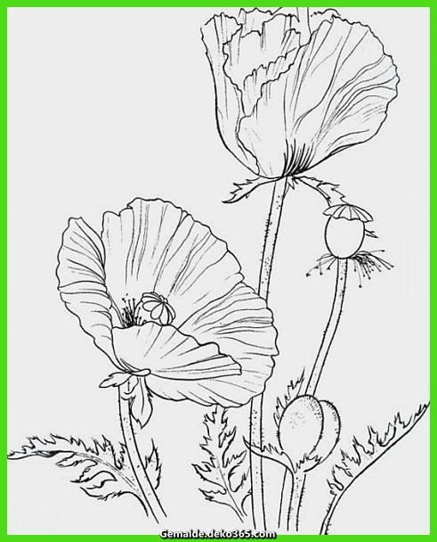 Malvorlagen Vögel und Blumen ausmalbilder Mohn 6
