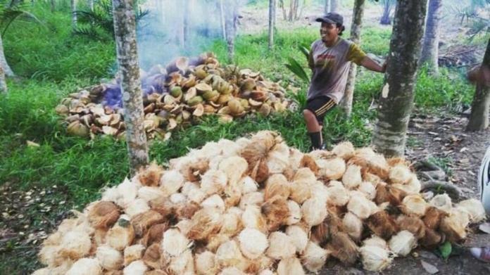 Petani Kelapa Tagih Janji Kampanye Samsurizal