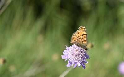 🦋 Les papallones de la Vall del Corb: diversitat i reptes per a la seva conservació