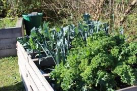 Brokkoli, Porree, Grünkohl