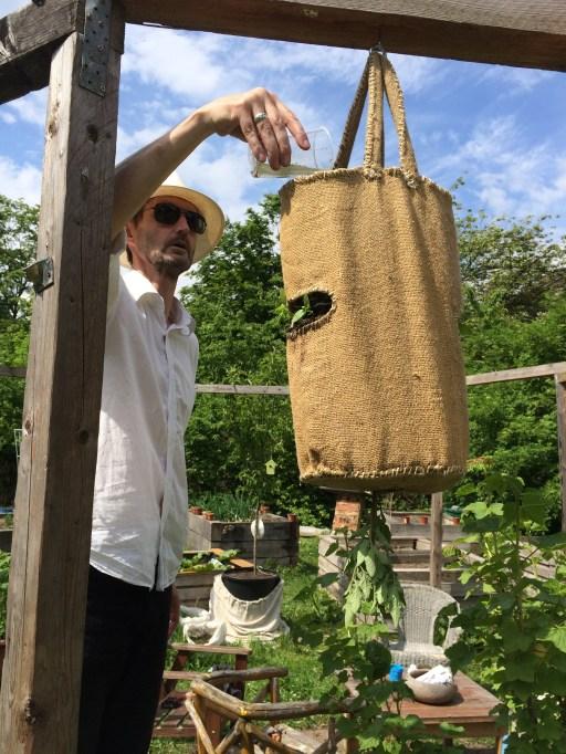 Lorengarten: Olivers hängender Tomatensack