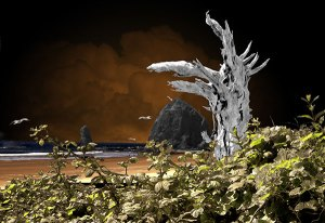 Image of Light Painting Cannon Beach