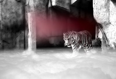 Lair of the Peppermint Tiger