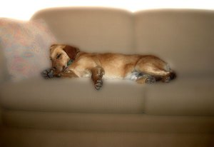 Image of Light Painting Let Sleeping Dogs Lie