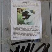 LOST PUPPY NAMED MATEO, SANTIAGO, CHILE
