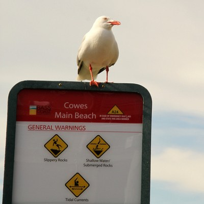 seagull perched on a sign
