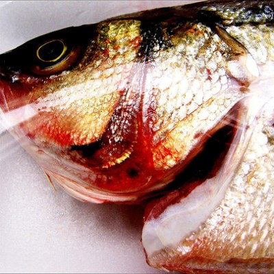 Fish Head no. 33