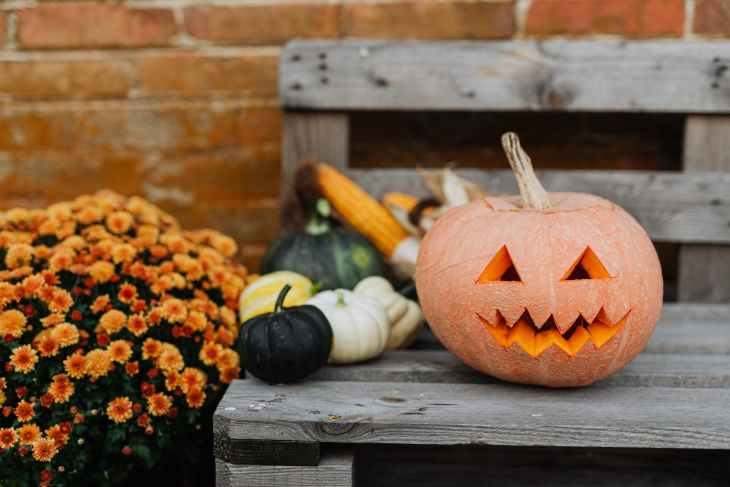 A giant orange pumpkin carved with a face on a bench next to loads of smaller pumpkins that are white, black and yellow next to a yellow flower bush.