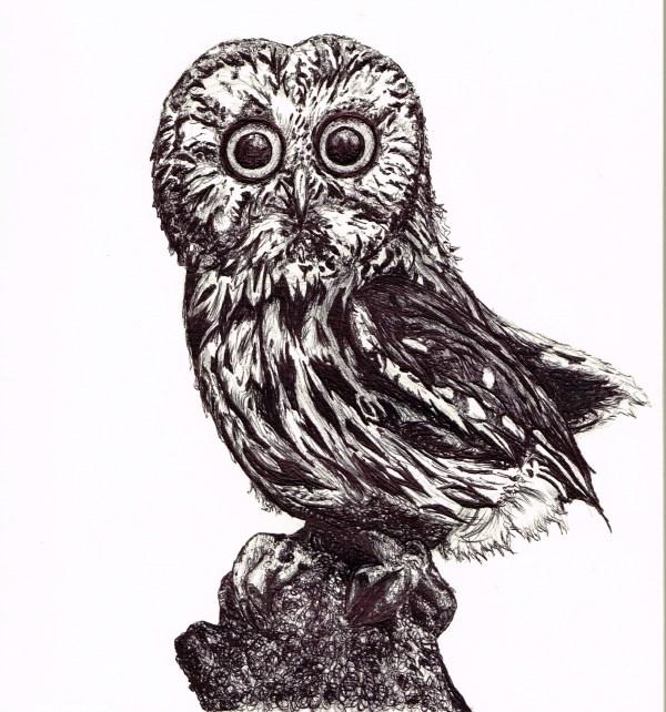 Baby Owl Biro Drawing Gemmamarie
