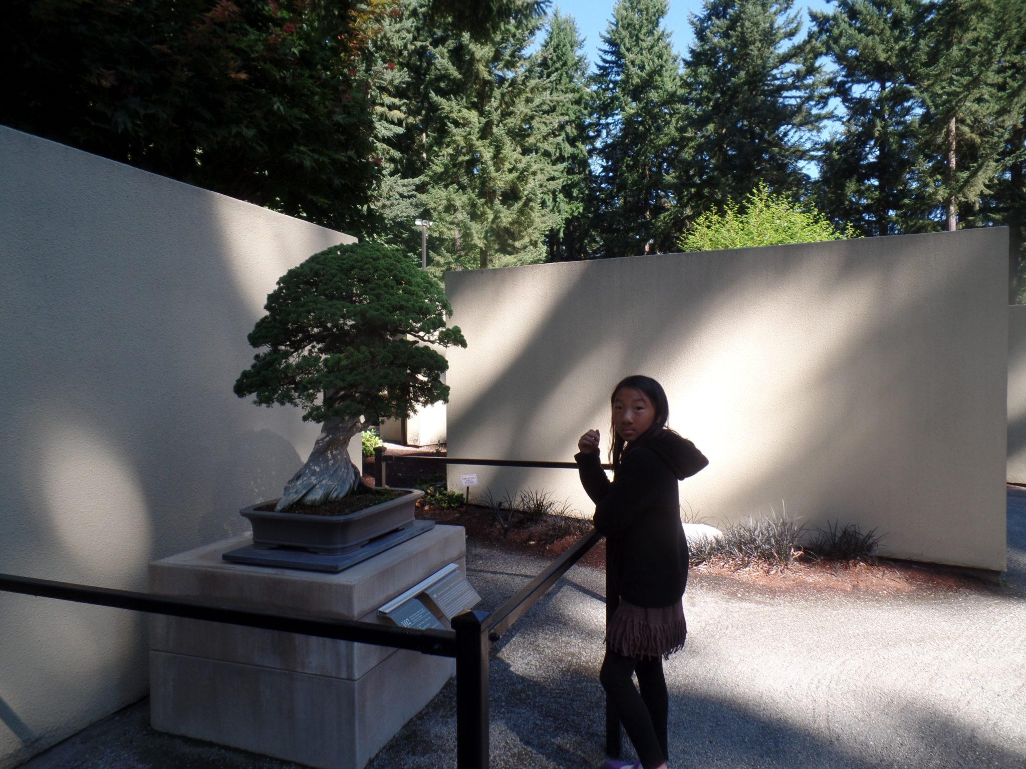 Pacific Bonsai Museum Gemma D Alexander