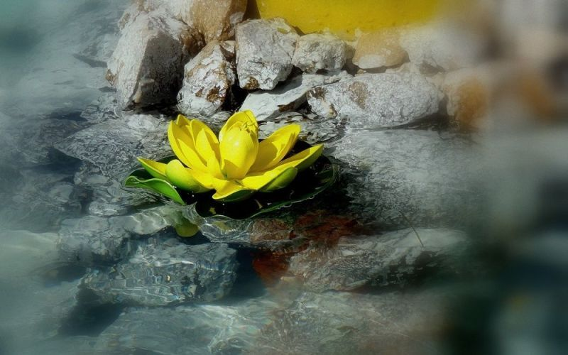 Flor entre rocas