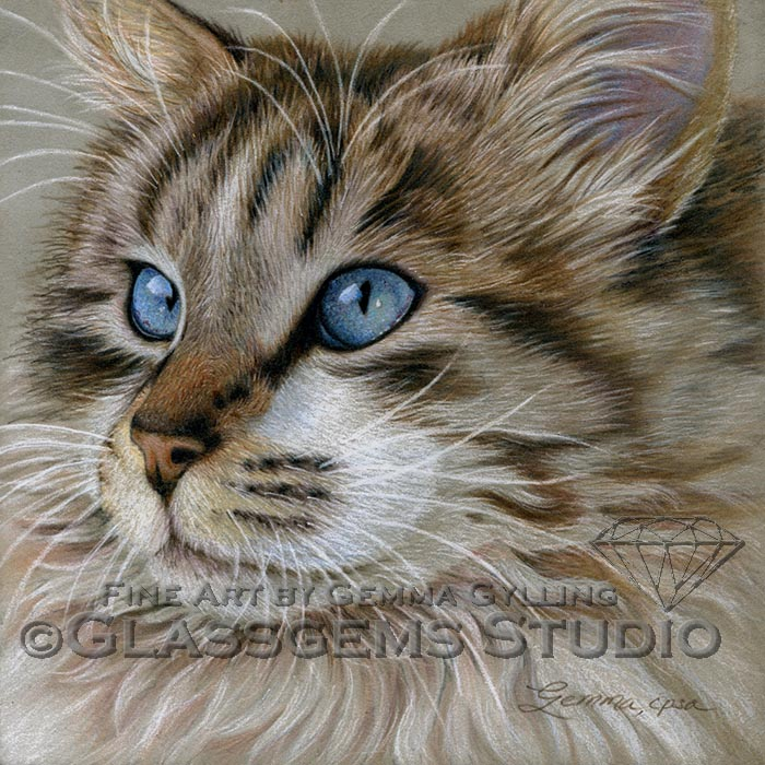 """Majestic"", Maine Coon cat, colored pencil on suede mat board, 8"" x 8"""