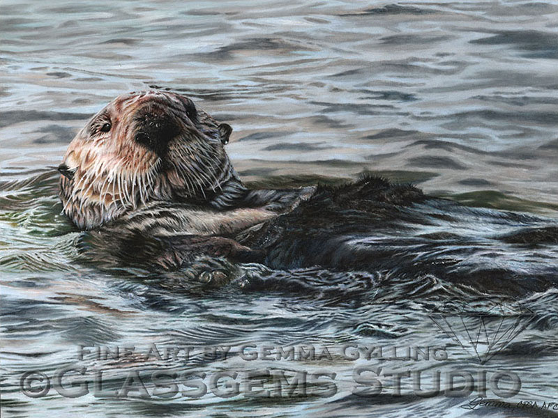 """Treasures of the Elkhorn Slough"", Sea Otter in Pastel on Pastelmat Card, 12"" x 16"""