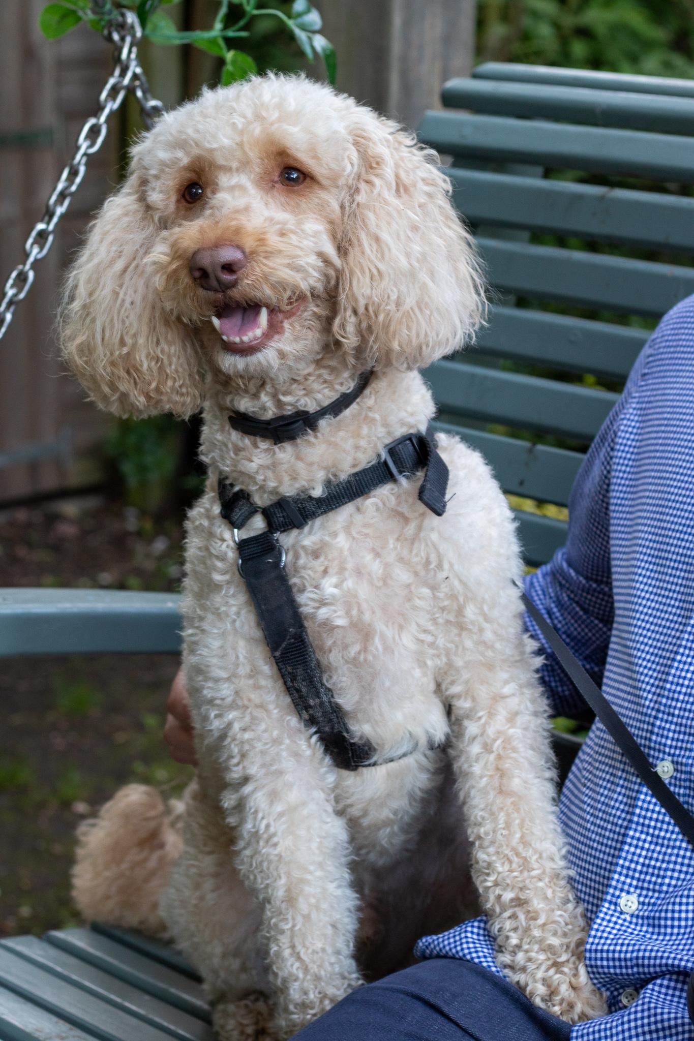 IMG 9837 - Griffon Forest: Dog Friendly Holidays