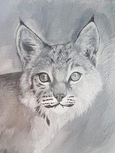 Wildlife portrait of a bobcat