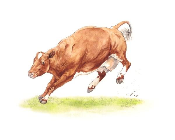 happy cow print