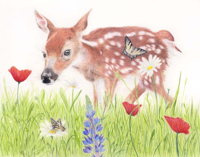 Deer Fawn Drawing