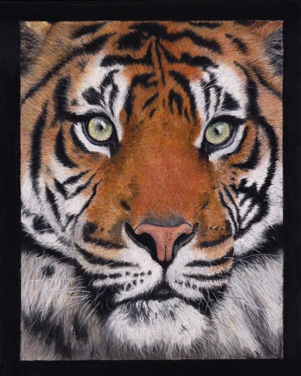 Big cat drawing -tiger